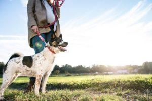 개는 감정지능을 가지고 있을까?