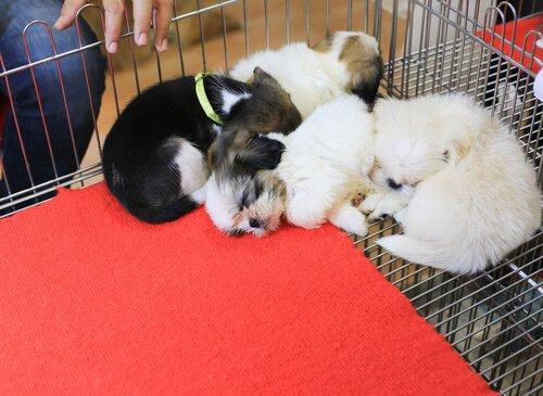 샌프란시스코의 새로운 법안: 반려동물을 사지 말고 입양하세요