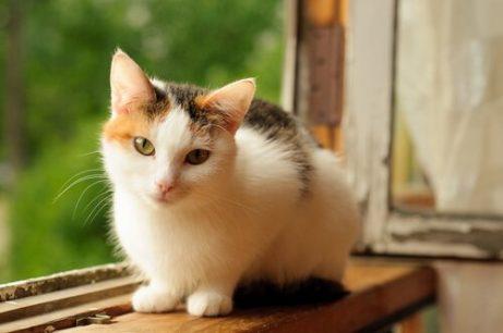 고양이 알레르기의 원인, 증상 및 예방