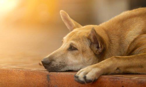개를 달래주기 위한 6가지 팁