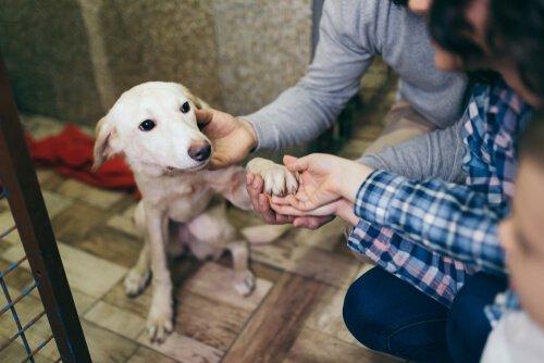 스페인에서 유기되는 반려동물이 증가하는 이유는 무엇인가?
