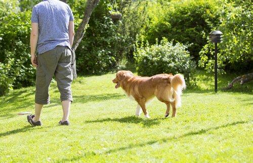 개는 왜 우리를 졸졸 따라다닐까?