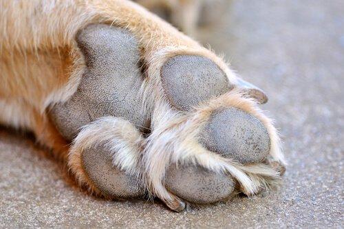 개 발바닥에 난 상처를 치료하는 방법