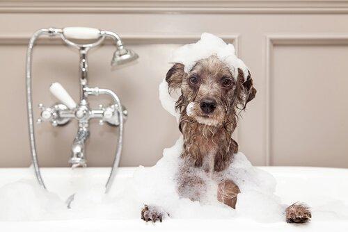 겨울철에 반려견을 목욕시키는 방법