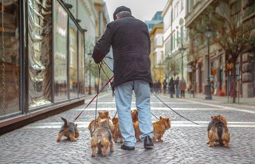 노인과 반려동물