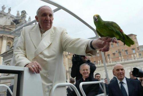 프란치스코 교황의 동물 사랑