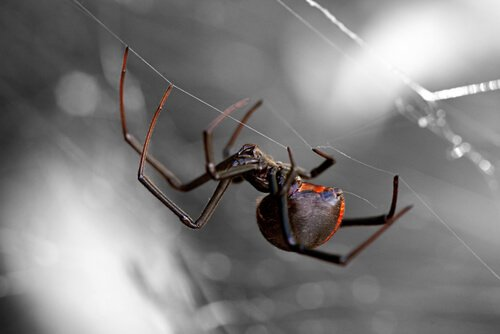 세상에서 가장 위험한 거미 8가지
