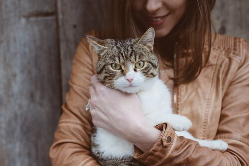 고양이에게 발생하는 톡소플라스마증