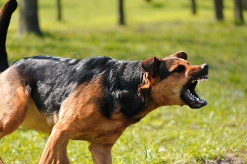 개에게 공격당할 때 따라야 할 4가지 팁