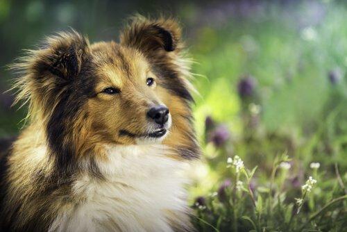 반려견을 건강한 개로 키우기 위한 열 가지 팁
