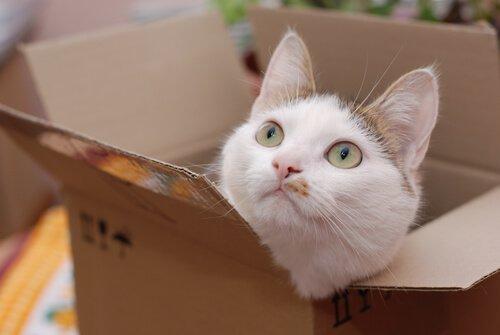 고양이는 왜 상자를 좋아할까?