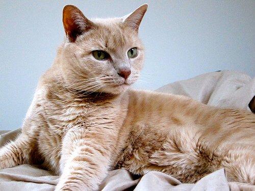고양이 중성화 수술을 해야 하는 이유
