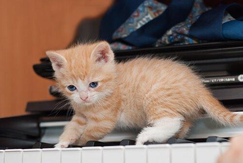 고양이를 키우면 좋은 점 10가지