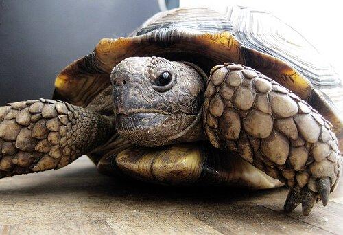 거북을 돌보고 키우는 일