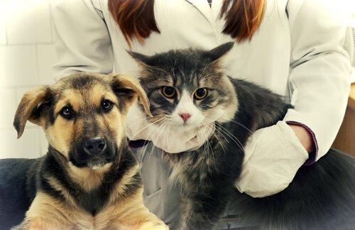 반려동물에게 가장 흔한 건강 문제 5가지