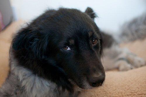 개 엘리히증은 무엇일까?