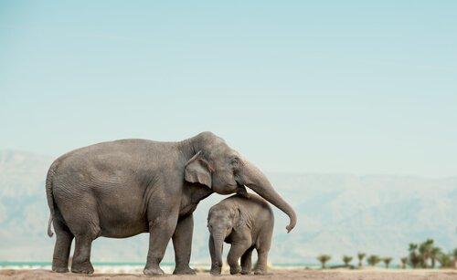 보츠와나에서 백여 마리의 코끼리가 살해되다