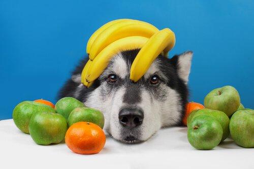 여름철 개에게 좋은 과일