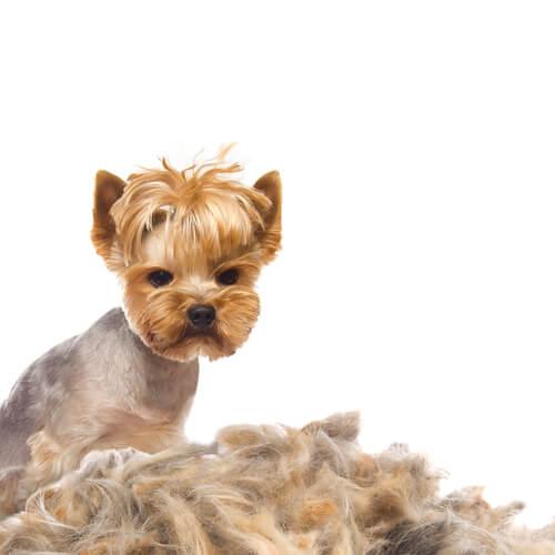 개 털빠짐의 원인과 치료