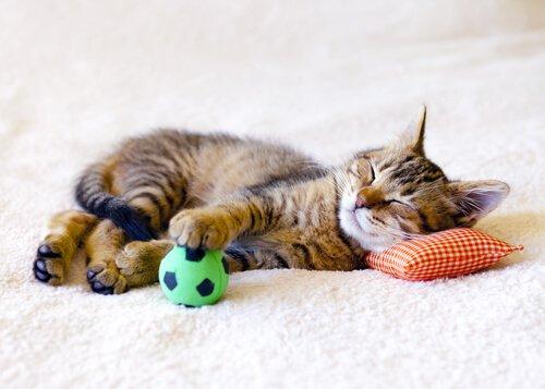 고양이를 집에 혼자 둘 때 주의할 점