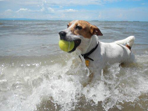반려견을 바닷가에 데려갈 때 지켜야 할 안전 수칙