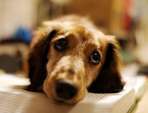 개 렙토스피라증은 무엇일까?