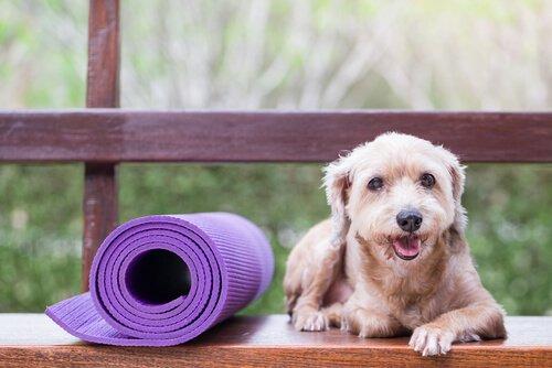 반려동물을 위한 예방의학