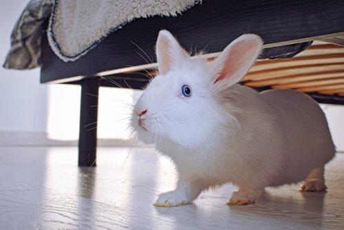 반려토끼 키우기 집에서 토끼를 키우면 어떨까?