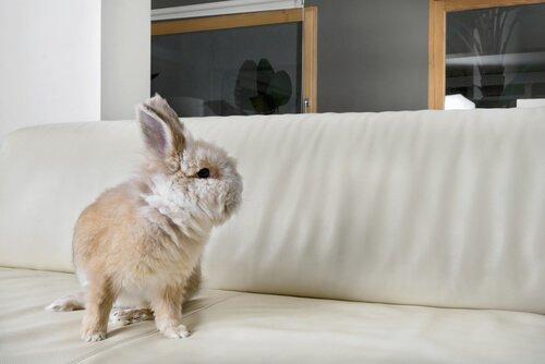 집에서 토끼를 키우면 어떨까?