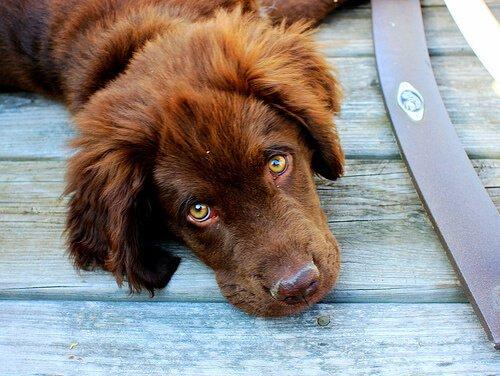 개 치주염의 증상과 치료