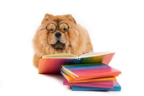 정서 지능이 가장 뛰어난 동물은?