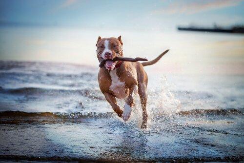 개가 좋아하는 게임과 활동