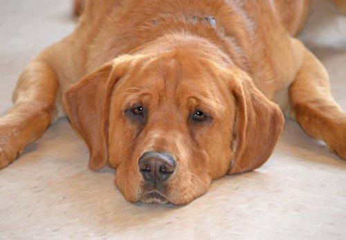 유기견 보호소에 홀로 남았던 특별한 개, 이스트우드