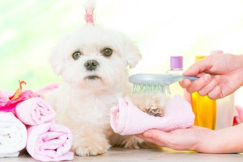개 전용 치약 및 구강 위생