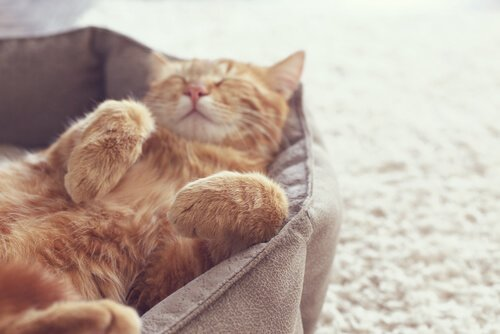새끼 고양이 키우기3
