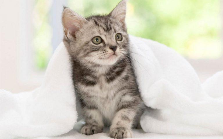새끼 고양이를 키우는 데 필요한 것은?