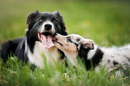 새로운 개를 가족으로 맞이하기