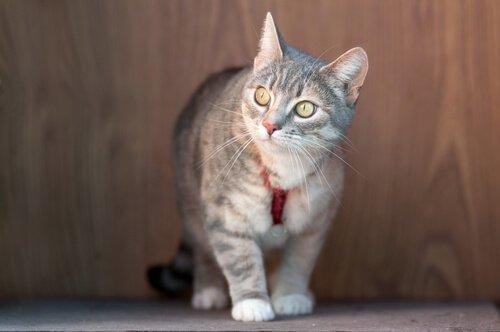 고양이에게 목줄이 필요할까?