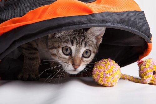 고양이와 함께 할 수 있는 운동