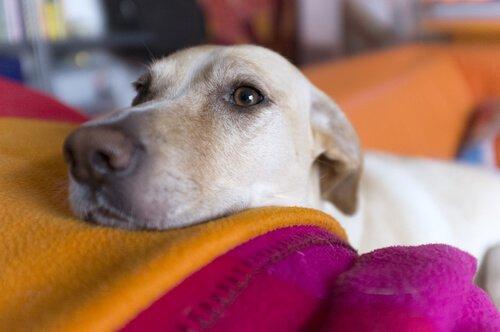 동물 눈을 검사하는 이유 및 방법
