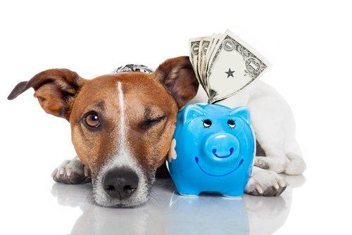 반려동물 보험을 선택하는 방법