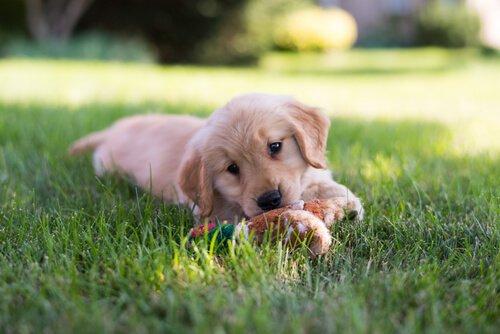 강아지들이 즐길 수 있는 놀이와 운동