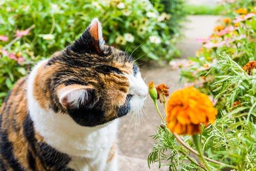 고양이들이 좋아하는 냄새 8가지