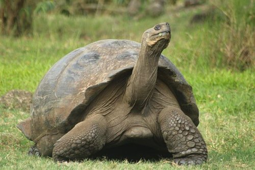 세계에서 가장 수명이 긴 동물들