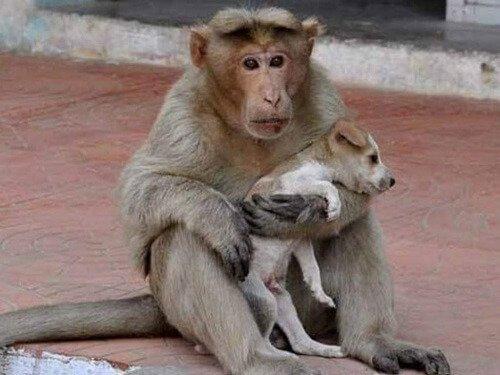 원숭이가 유기견을 입양하다