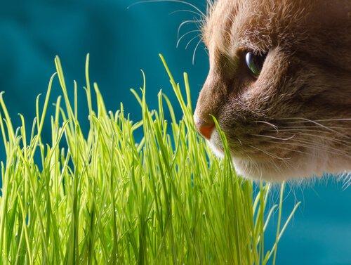캣닙은 고양이에게 어떤 효과가 있을까?
