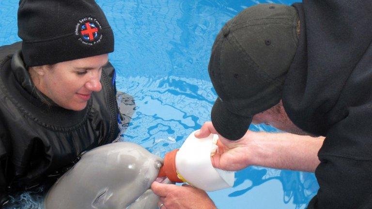 극적으로 구조된 사랑스러운 아기 벨루가 고래