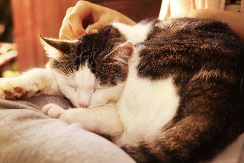 왜 고양이는 주인의 무릎 위에서 자고 싶을까?