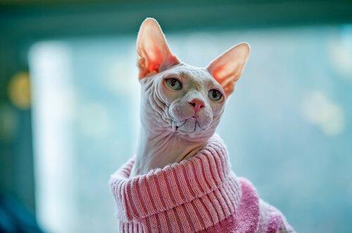 가장 이국적인 고양이 품종은?