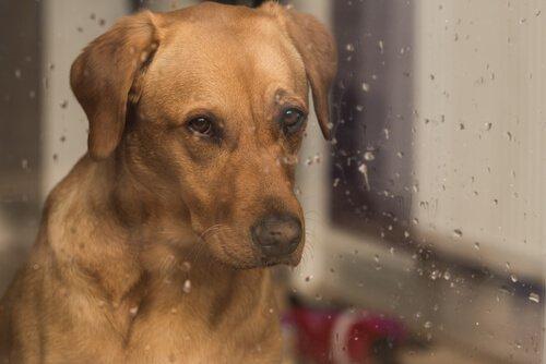 개가 비 오는 날을 싫어하는 이유